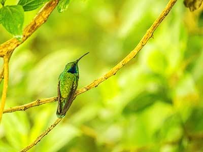 Rundreise Mittelamerika Artenvielfalt