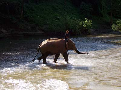 Rundreise Thailand Elefant