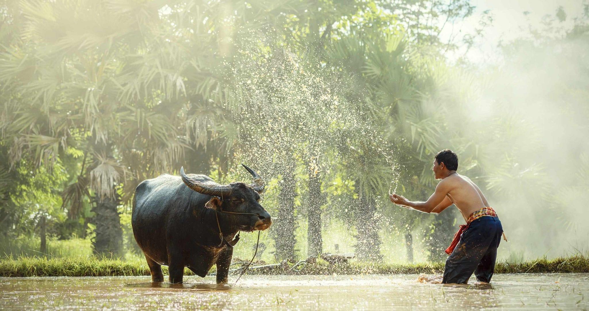 Thailand – Traumstrände und mystische Tempel