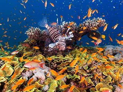 Rundreise Jordanien Korallenriff
