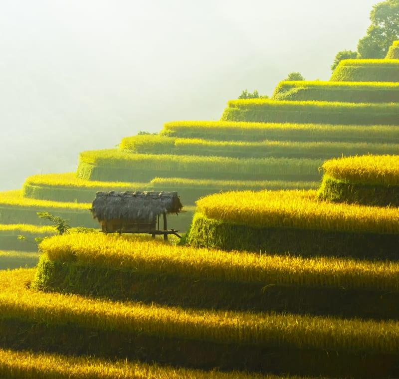 Rundreise Indochina Vietnam Reisterassen