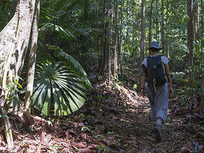 Rundreise Malaysia Borneo Dschungel