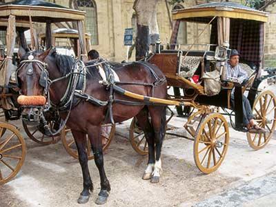 Rundreise Malta Valleta Kutsche