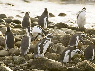 Rundreise Argentinien Feuerland Pinguine