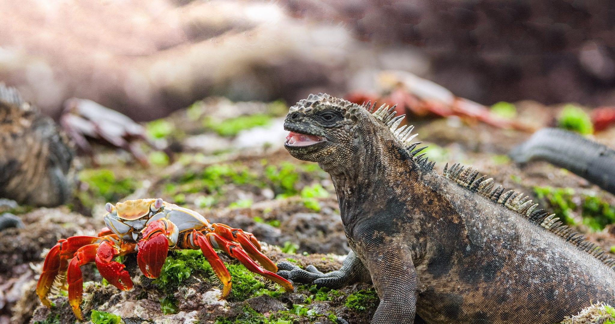 Ecuador – Vulkane und Darwinspatzen