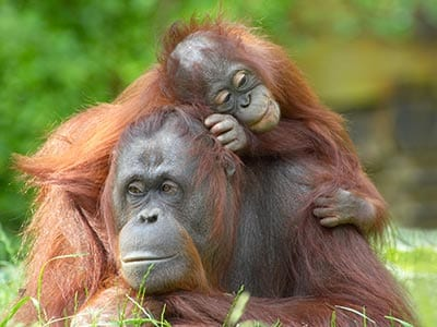 Rundreise Indonesien Sumatra Bohorok