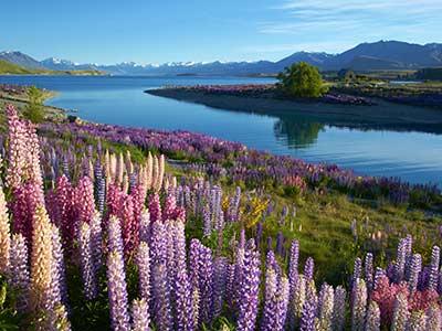 Rundreise Neuseeland Lake Tekapo