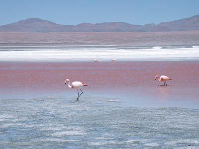 Rundreise Bolivien Colorada Lagune