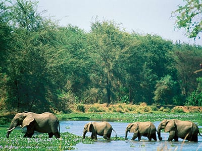 Rundreise Kenia Elefanten