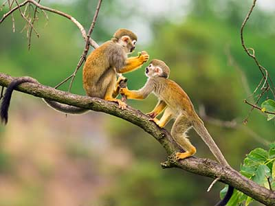 Rundreise Kolumbien Regenwald Affen