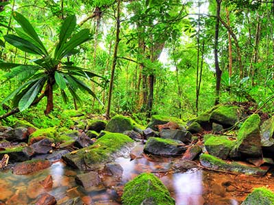 Rundreise Madagaskar Dschungel
