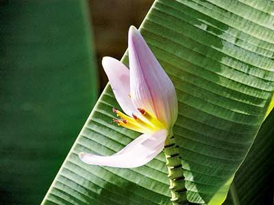 Seychellen Urlaub Fauna und Flora