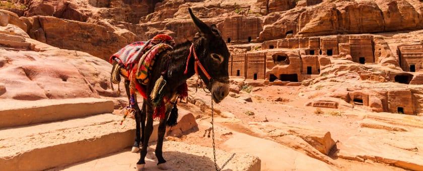 Dr. Tigges Themenjahr: Jordanien und Israel - Brücken über den Jordan