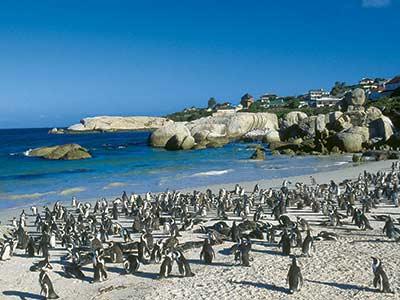 Rundreise Südafrika Boulders Beach