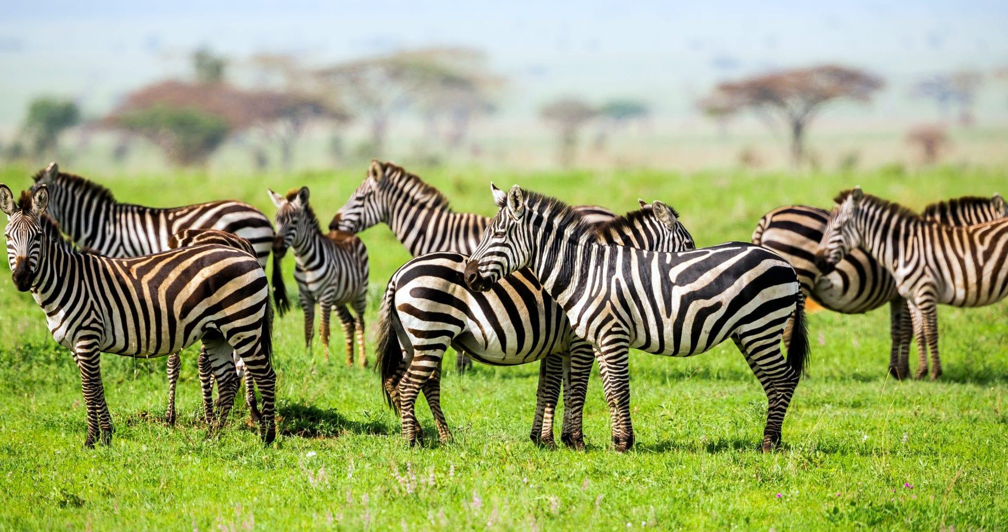 Südafrika – Tierparadies am Kap