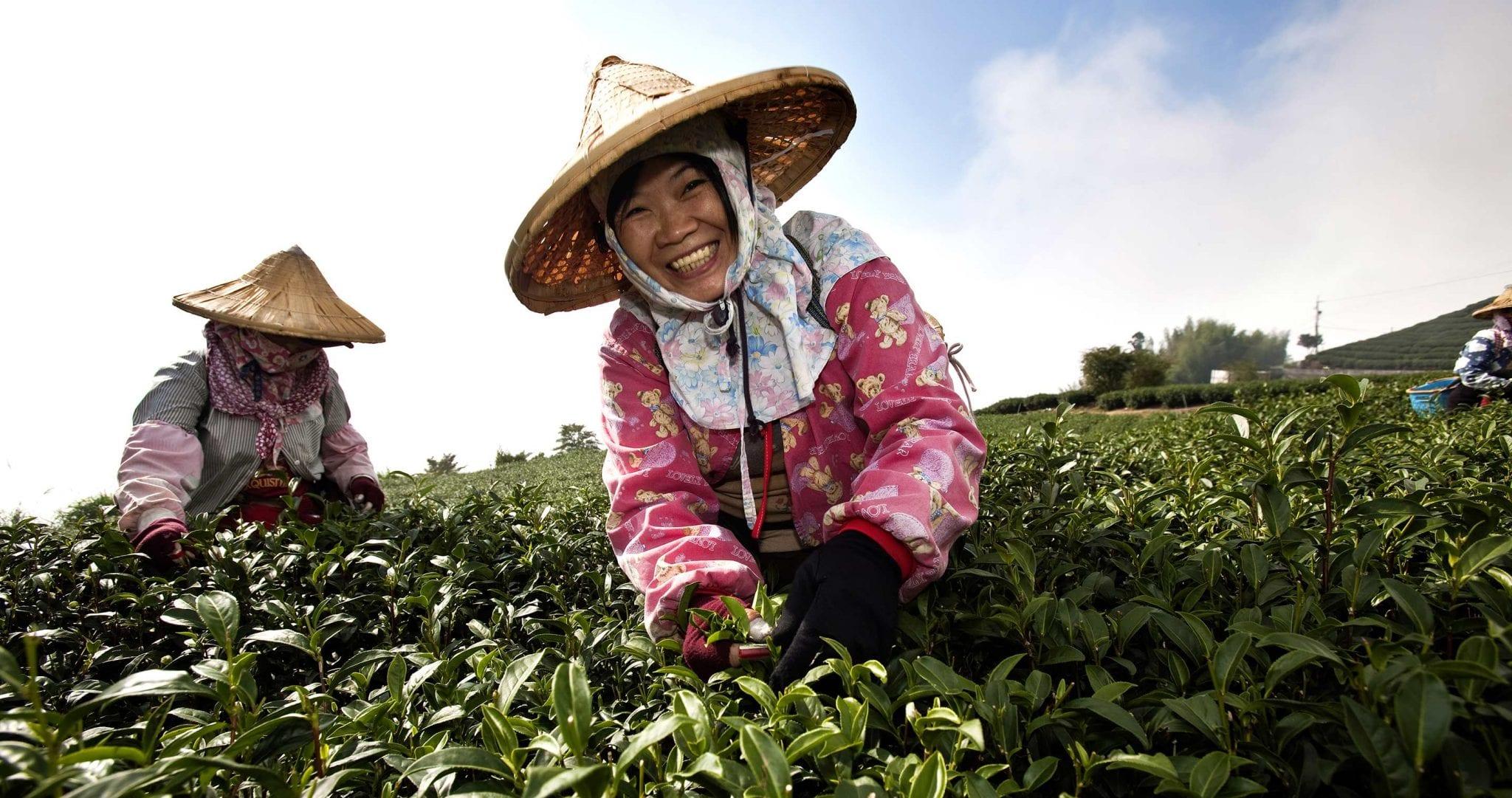 Taiwan – die Perle im Wendekreis des Krebses