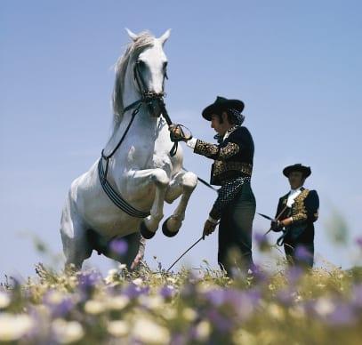 Pferdedressur eines weißen Schimmels in königlich-andalusischer Reitschule