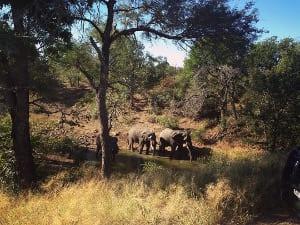 Zwei Elefanten im Krueger Nationalpark