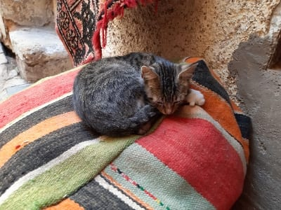 Marokko Gruppenreise mit Gebeco - Fès Katze