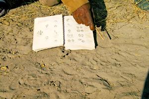 Namibia - Spurenleser der Khwe