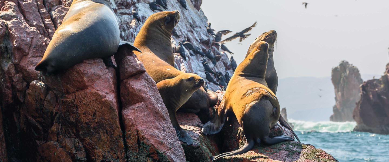 Gruppenreise Peru - Ballestas Inseln