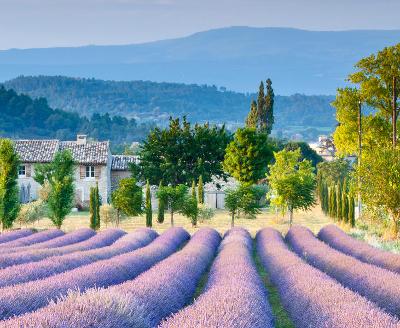 Gebeco Erlebnisreise Provence