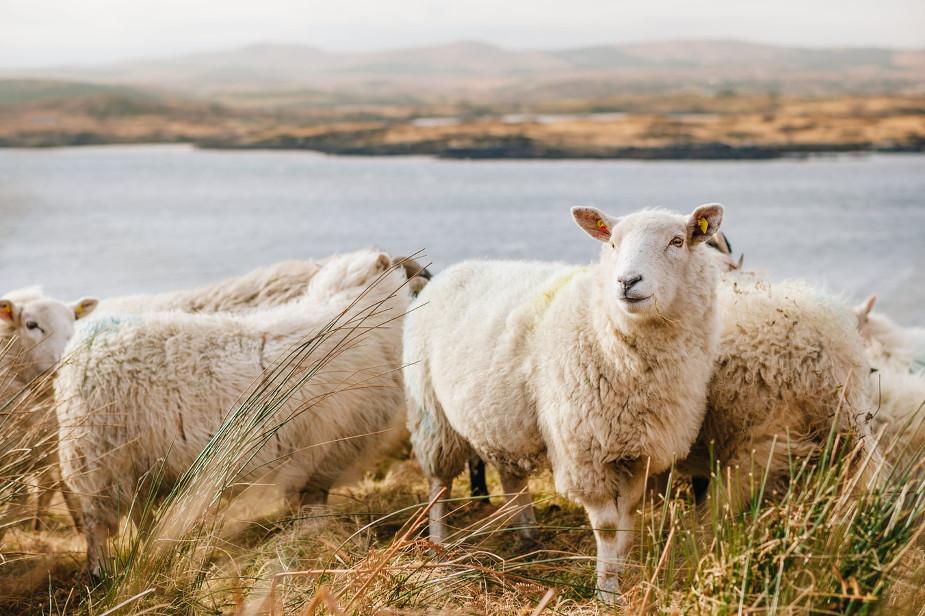 Sehnsuchtsort Irland