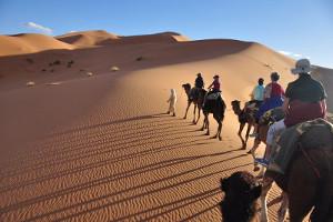 Ausritt mit Kamelen