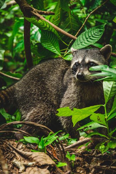 Artenschutz in Costa Rica